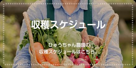 収穫スケジュール